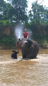 Anatara Golden Triangle Elephant bath