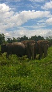 Anatara Golden Triangle elephants