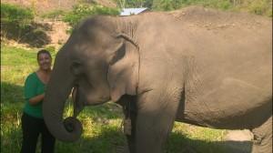 BEES elephant & me